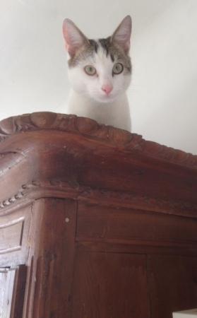 Mon chat armoire