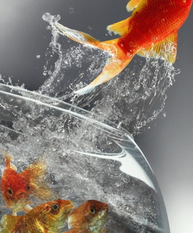 fishsuicide-1.jpg