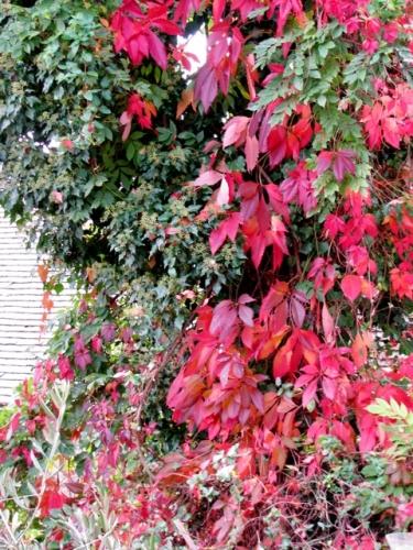 automne 2008.jpg