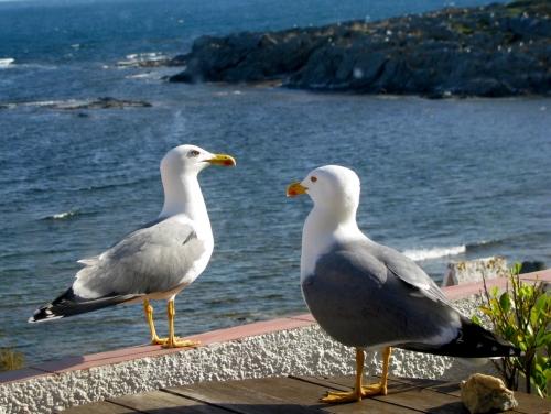 Mouettes de Cadaqués.jpg