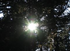 Soleil ds le sous bois.jpg
