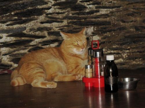 gato Tao.jpg