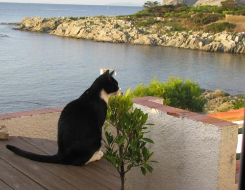 Méditation del gato !.jpg