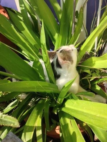 chat fleur.jpg