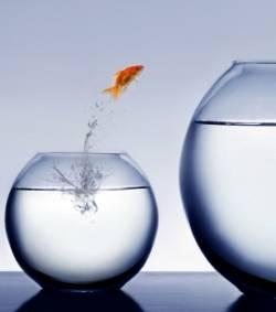 poisson saute.jpg