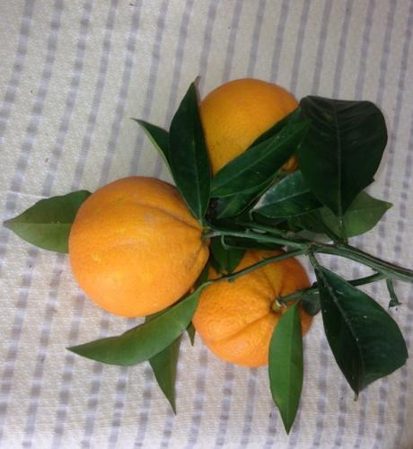 trois oranges.jpg