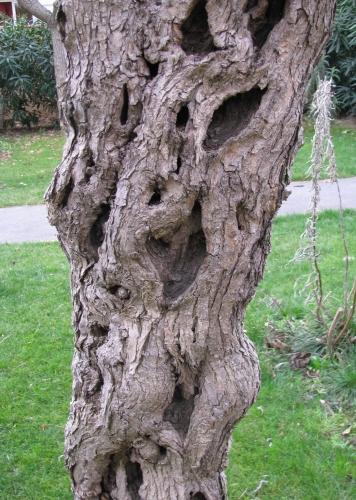 Le bel arbre .jpg
