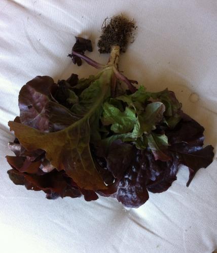 première salade.jpg